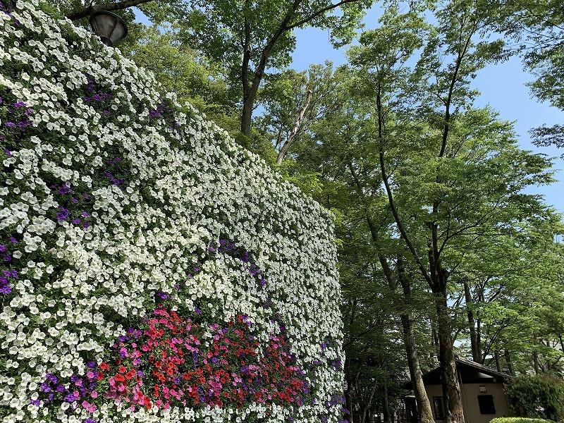 みしま花のまちフェア ガーデンシティみしま 白滝公園
