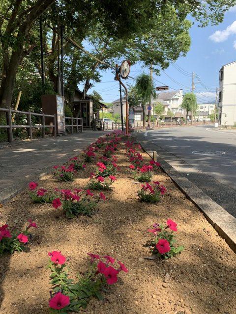 桜川 白滝公園 水辺の文学碑 花壇 みしま花のまちフェア