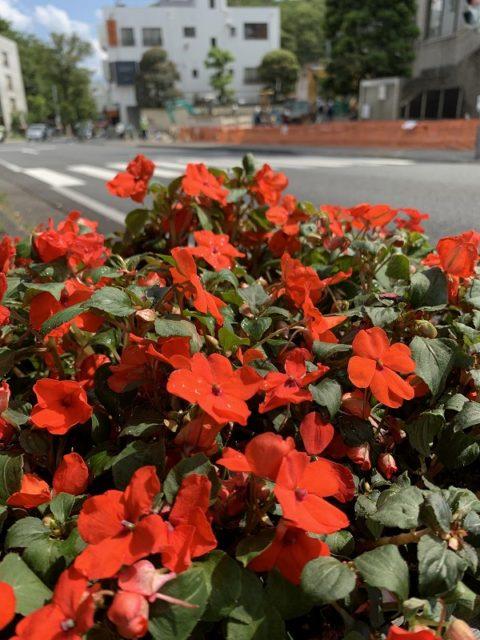 花のまちフェア 花飾り プランター