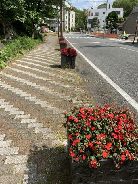 プランター 花のまちフェア 花飾り