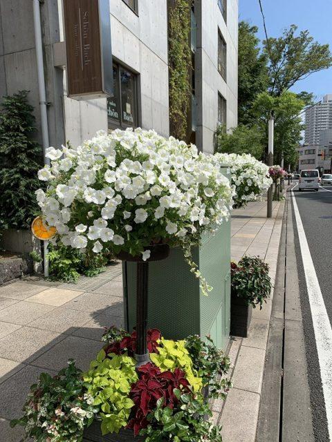 花のまちフェア ガーデンシティ ハンギングバスケット 花飾り