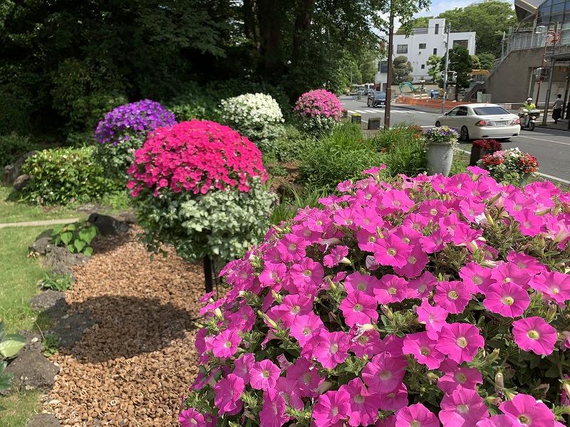 ガーデンシティ三島 花飾り 三島花のまちフェア