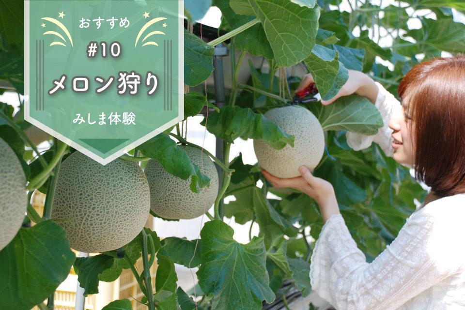 パーク 伊豆 フルーツ